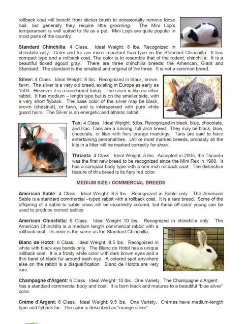 Bunny Rabbit Books Rabbit Book Bunny Book Rabbit Magazine Bunny