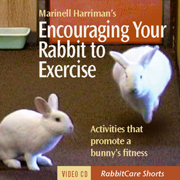rabbit exercise